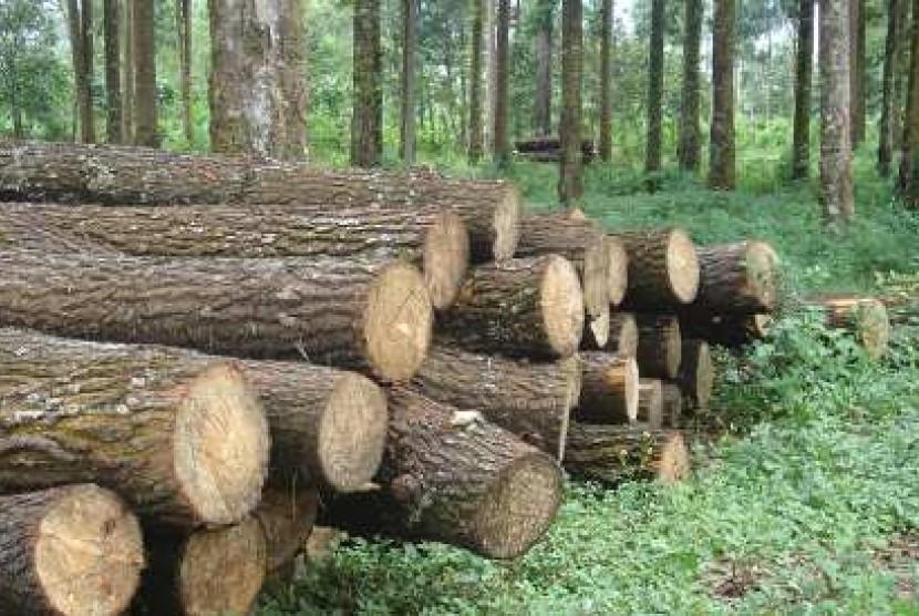 kayu ulin kalimantan