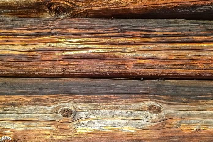 kayu suren